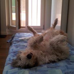 Lurcher o Longdog?
