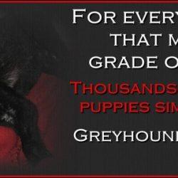 Dialogare e cambiare le cose dall'interno: strategie perdenti per i greyhound! (parte 2)