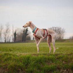Approccio al cane timoroso