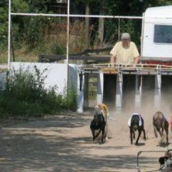 Perché siamo contrari a far correre i cani anche nei cinodromi amatoriali e in qualunque forma di coursing