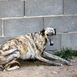 Il cane traumatizzato: come relazionarsi e aiutarlo a superare le sue paure