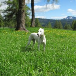 Perché i nostri cani non devono vivere all'aperto