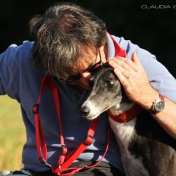 Perché amo i greyhound
