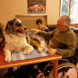 L'animale da pet therapy