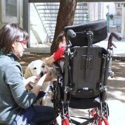 Suddivisione programmi di lavoro della pet therapy