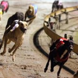 Great result for the Greyhound Protection League of New Zealand