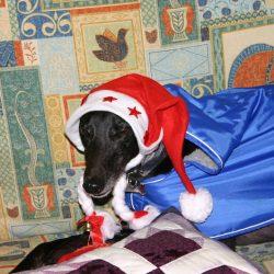 E´ Natale: usa la testa, pensaci 100 volte prima di prendere un cane.