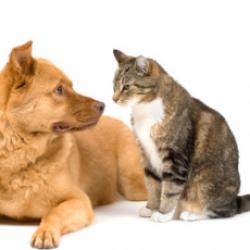 Il Cucciolo? Amico e antidoto alla solitudine per 1 adolescente su 2