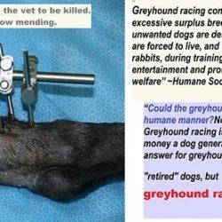 Potrebbe mai il greyhound racing operare in modo umano?