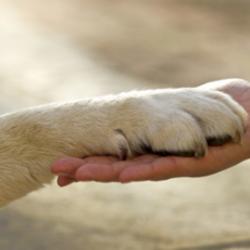 DIFENDIAMO I NOSTRI AMICI: NEL MONDO LA GIORNATA DEI DIRITTI DEGLI ANIMALI