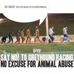 Diciamo NO alle corse con i levrieri. Non ci sono giustificazioni per gli abusi sugli animali!