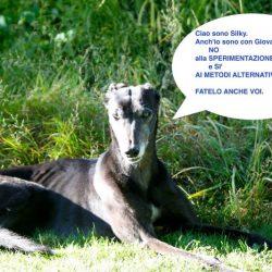 No alla sperimentazione animale, sì ai metodi alternativi
