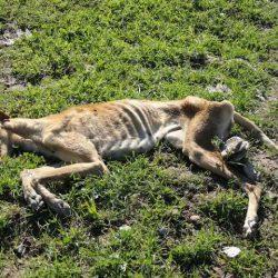 E' la fine della stagione della caccia. Il genocidio dei galgo è alle porte.