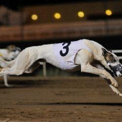 Pet Levrieri Onlus: Associazione in Tutela dei Cani sfruttati nelle Corse