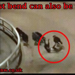 Cosa c'è di male e sbagliato nelle corse dei greyhound?