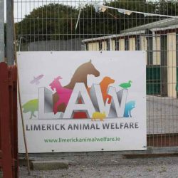 Limerick Animal Welfare collaborerà esclusivamente con noi