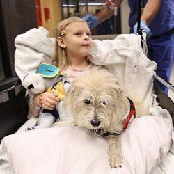 Un cane terapeutico ha accompagnato una bambina in sala operatoria