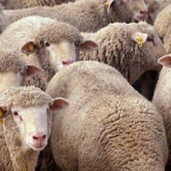 DALLA ROMANIA IN CINA: I VIAGGI HORROR DI 6,5 MILIONI DI ANIMALI