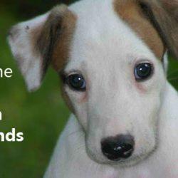 Fermiamo l'uccisione dei greyhound australiani in Cina – Firmate questa petizione