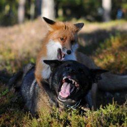 """Due specie diverse legate da un solo """"interesse"""": l'amicizia!"""