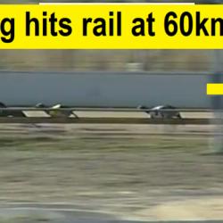 La velocità media di un levriero è di 63 km. Immaginate di correre in un recinto a questa velocità.