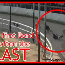 Condizioni di vita di un greyhound sfruttato nelle corse