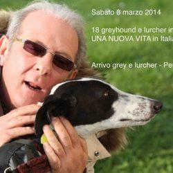 Arrivo greyhound e lurcher –  Sabato 8 marzo 2014