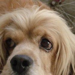 BORG APRE AL BENESSERE ANIMALE IN UE, ENPA: STOP A BABELE NORMATIVA