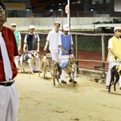 In Australia gli animalisti  si stanno battendo affinchè il governo vieti le esportazioni di greyhound al cinodromo di Macao