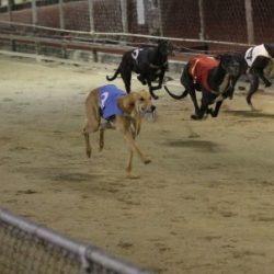 Australian industry group vieta le esportazioni di cani da corsa a Macau