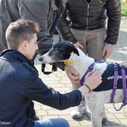 Un'altra giornata di festa: arrivo greyhound e lurcher – 8 marzo 2014