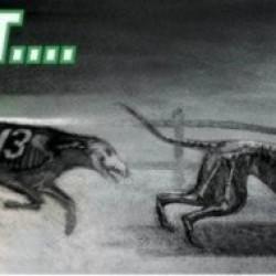 Perché il greyhound racing è crudele e perché è necessario che chiuda: 28 domande e relative risposte