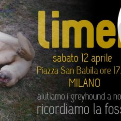 Remember the Limerick Greyhounds in Italy – Pet levrieri