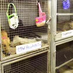 Bay State Politicians Endorse Greyhound Cruelty