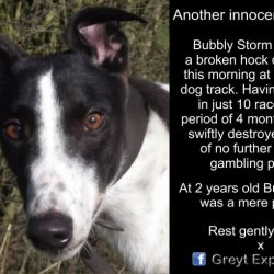 Bubbly Storm, 2nd birthday last month, was swiftly destroyed after sustaining a hock injury