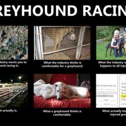 La menzogna della neutralità: come uccide i greyhound.