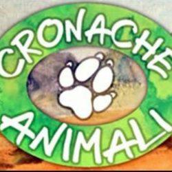 Cronache animali puntata del 17 MAggio 2014