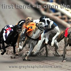 WHY GREYHOUND RACING IS CRUEL AND MUST BE ABOLISHED: 26 questions and answers
