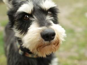 cane-che-guarda