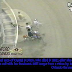 I Greyhounds da corsa sono vittime di tremendi incidenti in pista