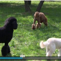 Pet Therapy a Padova e Verona