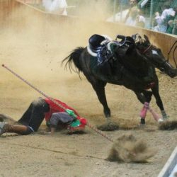 Giostra dell'Orso a Pistoia. Muoiono due cavalli.