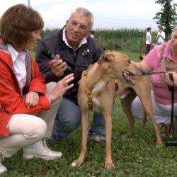 La seconda puntata di Videoadozioni dedicata a Pet levrieri