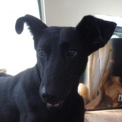 Roxy – adottata il 29 novembre 2014