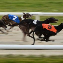 The Independent has woken up to the situation of racing greyhounds in the UK