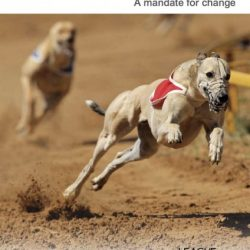 Greyhound Racing in Great Britain