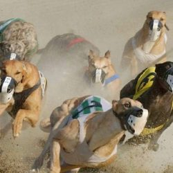 Where do you stand on the greyhound racing debate?