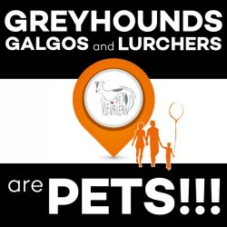 Greyhounds, galgos and lurchers are PETS and amazing life companions!