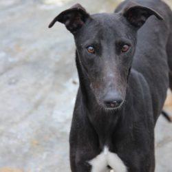 Negrito (Negri) adottato 9 Maggio 2015