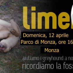 In memoria dei greyhound di Limerick – Passeggiata a Monza – domenica 12 aprile